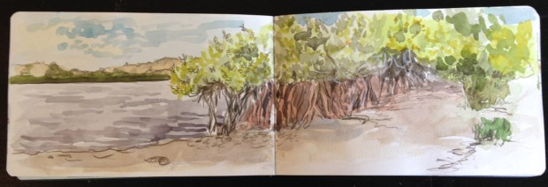Mangroves near Bahia Magdalena, in watercolor and pencil